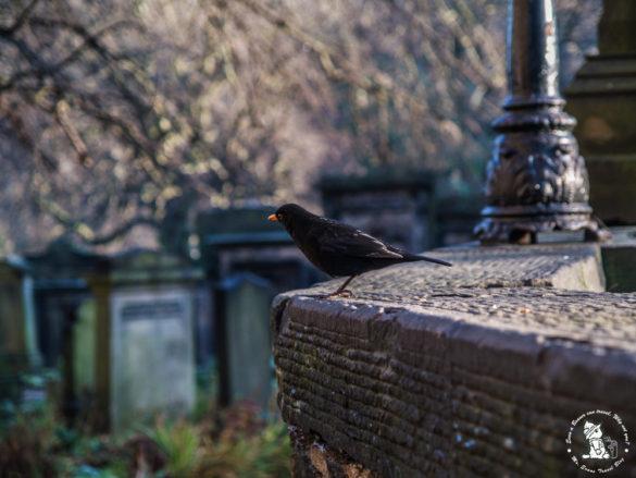 little-crow-at-edinburgh