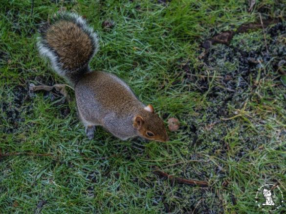 squiler-at-edinburgh-park
