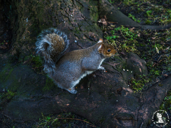 squirel-at-edinburgh-park-2