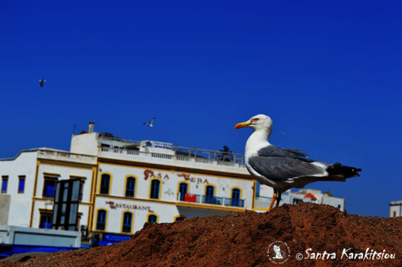 marocco-travel18